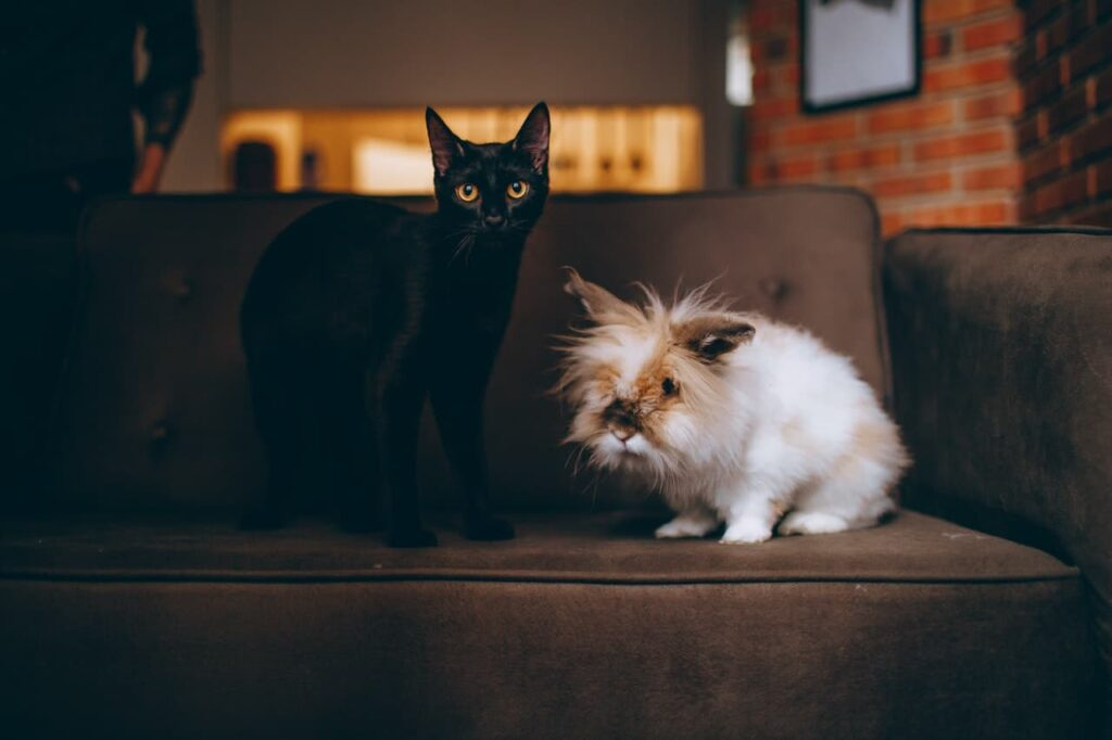 WHAT TENANTS NEED TO KNOW ABOUT PETS AND SMOKING IN A RENTED HOME